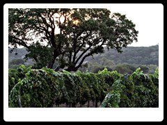 hill_country_wine_trail1