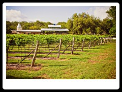 hill_country_wine_trail3